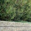 Romerblokke grå miljø-krop 144 pic orig.st-6226